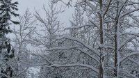beautiful snow scene1