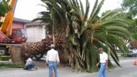 one piece palm tree out