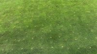 Aerated green